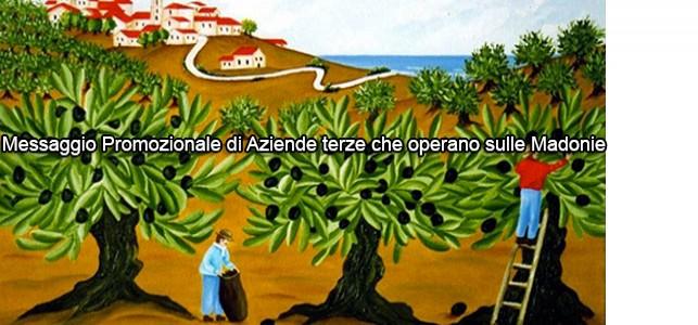 Uliveto San Francesco - Le vie dell'olio e del latte, a San Mauro Castelverde, nell'incantevole Parco Naturale delle Madonie